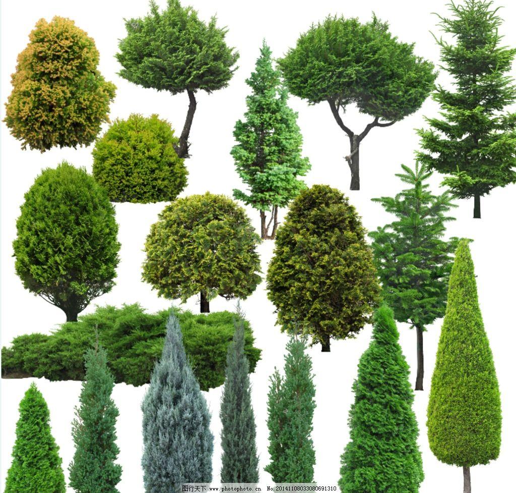 园林植物ps素材 树木