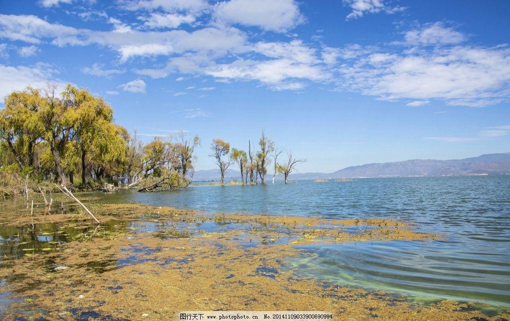 海里树林 黄树林 长在水里的树 秋天风景 透明海水 摄影 旅游摄影