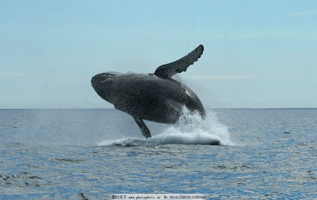 荒岛余生多次出现鲸鱼