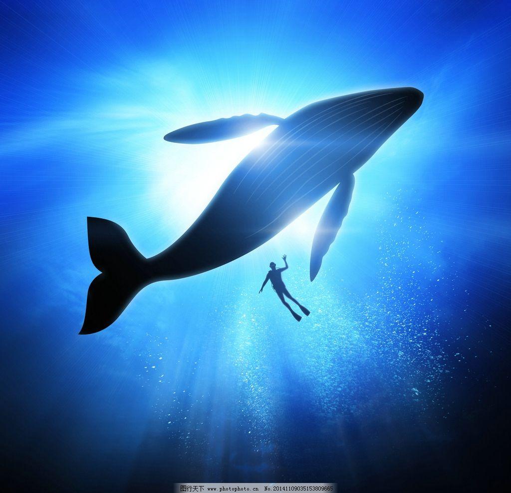 鲸鱼 野生动物 大海 海洋 脯乳动物 生物世界 海洋生物 摄影 生物世界