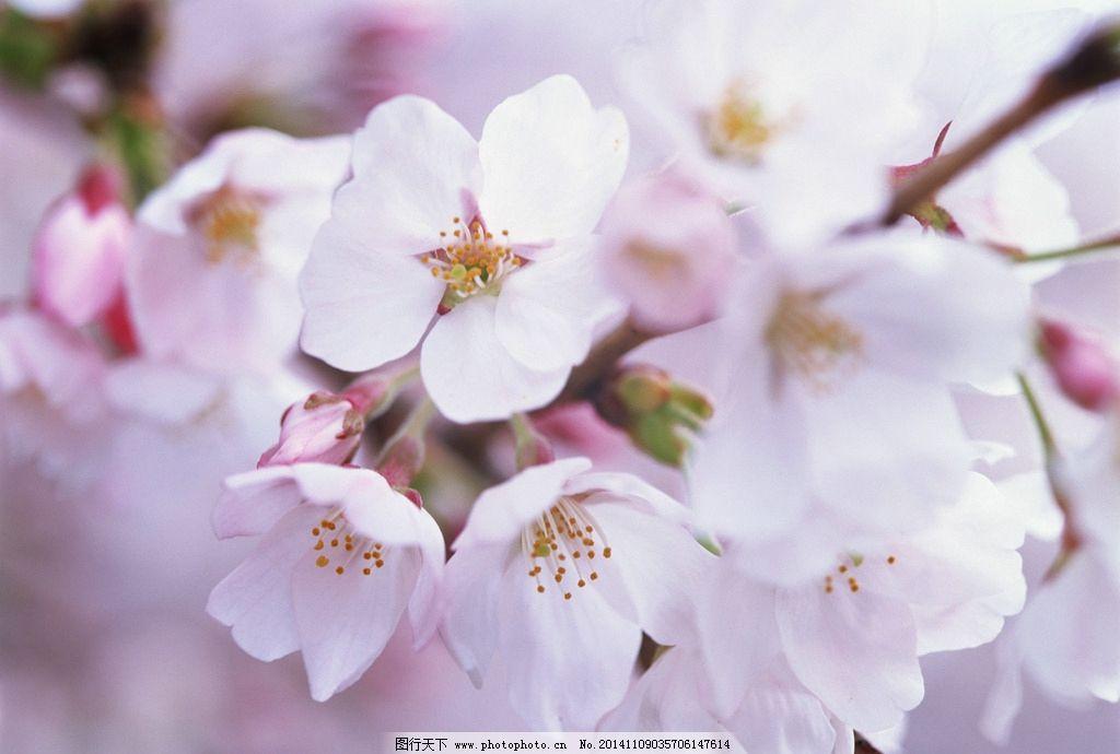桃花 鲜花 桃树 春天 桃花林 粉色鲜花 风景摄影 园林摄影 鲜花拍摄