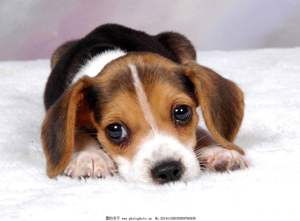 图趴着的小狗图片
