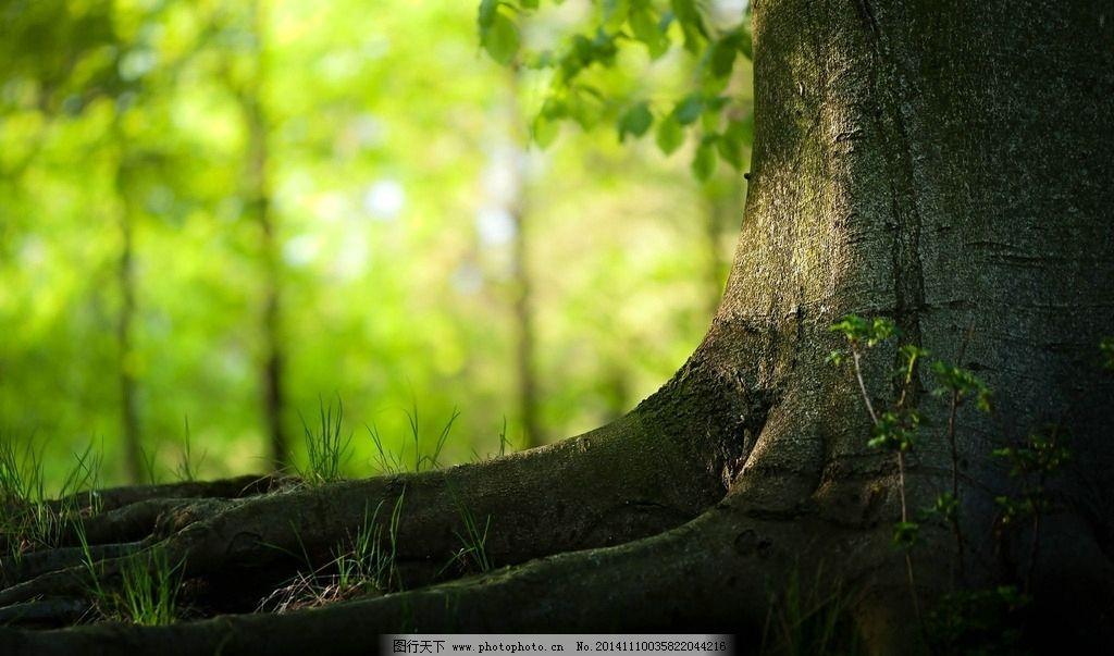 树根图片_树木树叶_生物世界_图行天下图库