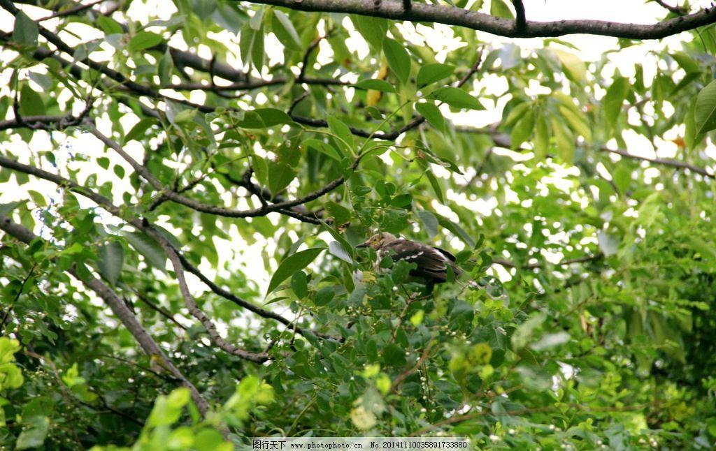 树枝 绿叶 绿色 绿色植物 鸟 树干 嫩叶 红树林公园 摄影 生物世界