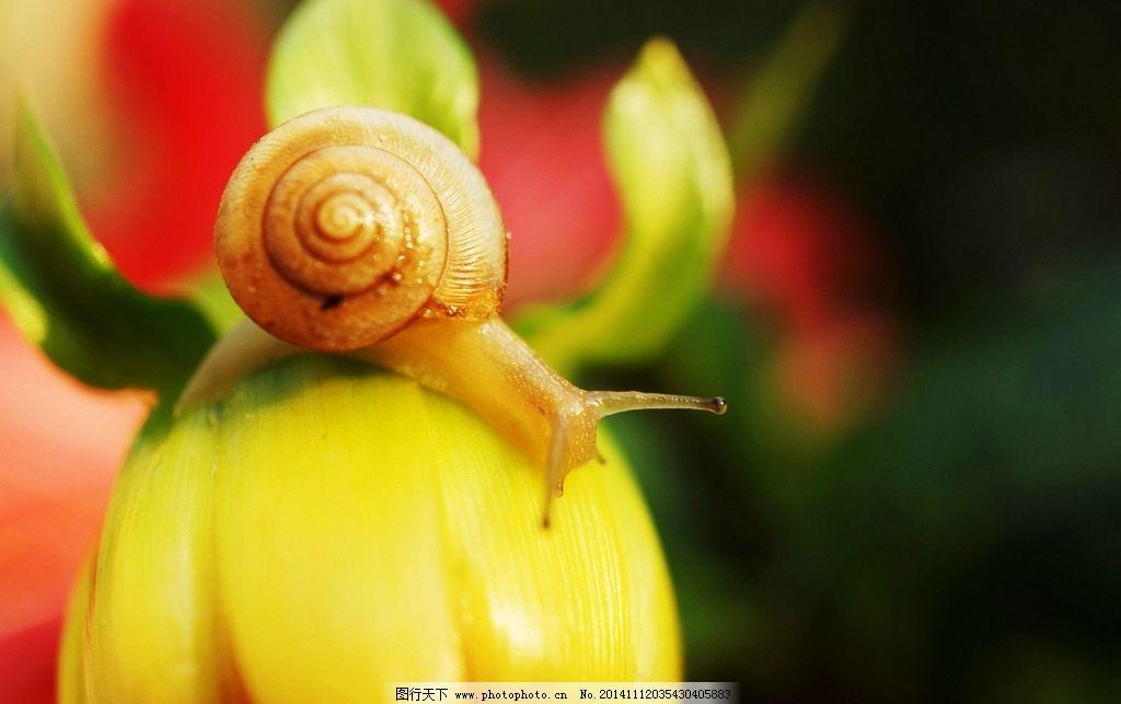 唯美蜗牛 动物 软体动物 特写 微距 清新 意境 自然 生物 可爱