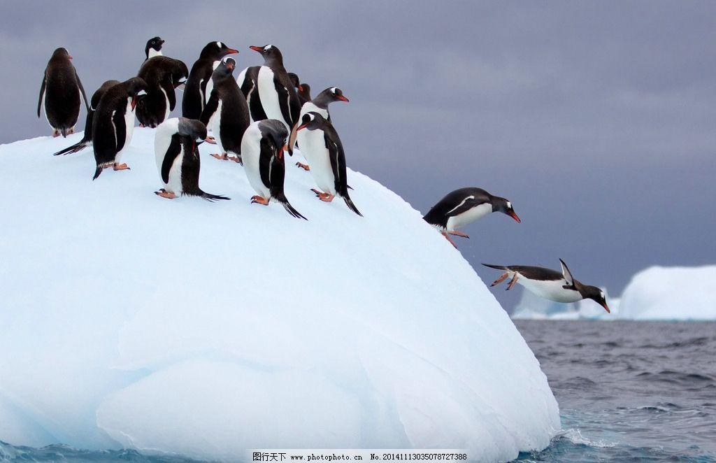 野生动物园企鹅图片