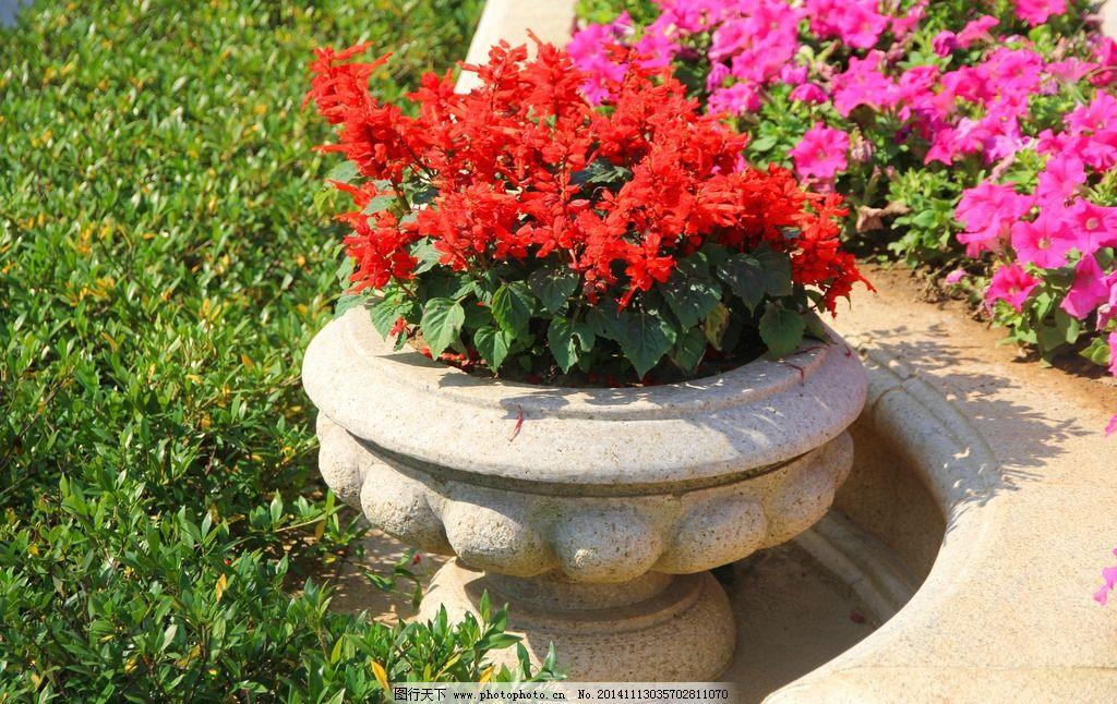 一串红 欧式 花卉 欧式园林 绿色植物 花坛 摄影
