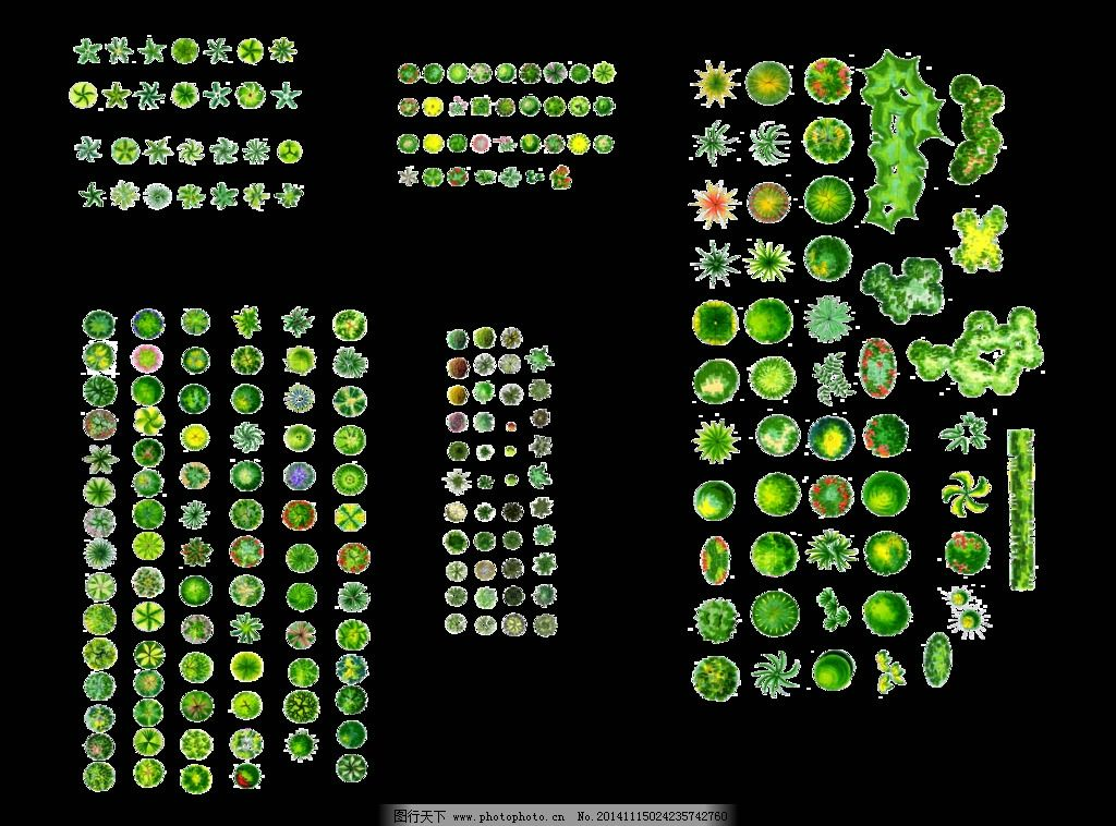 平面植物图片