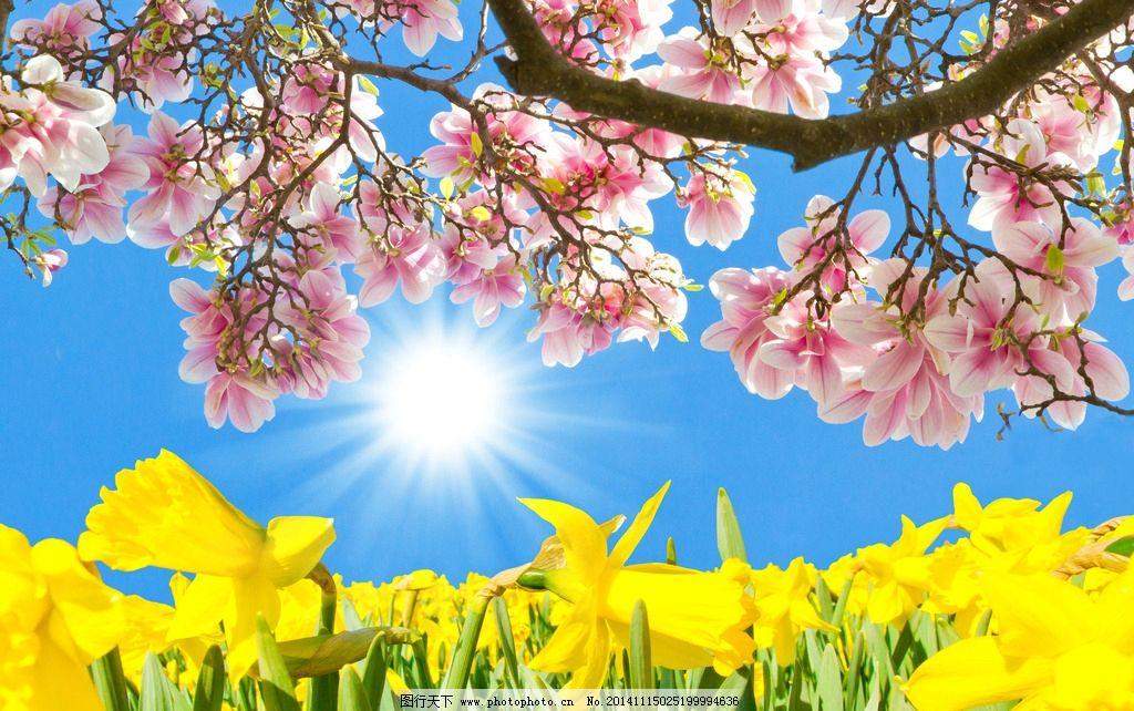 春日花朵 春日阳光 春天 春日景色 春日风景 花朵 粉色花朵 春天 设计