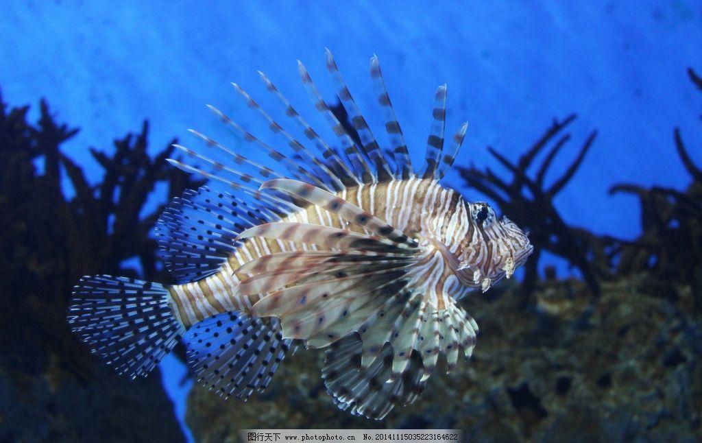 深海鱼 动物 鱼
