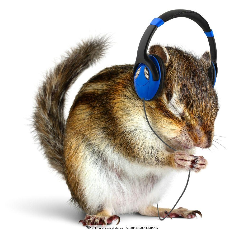 花栗鼠 戴耳机 小松鼠 松鼠 宠物 可爱 野生动物 生物世界 设计 生物