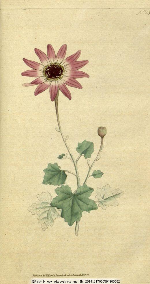 花卉装饰画 田园 油画 壁画 墙画 手绘 花类图鉴 文化艺术 传统文化