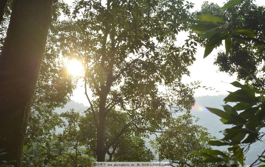 树间阳光图片