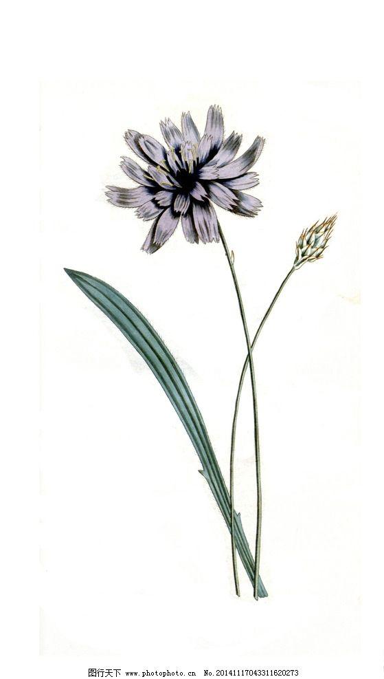 花卉 田园 装饰画 油画 壁画 墙画 手绘 花类图鉴 设计 文化艺术 传统