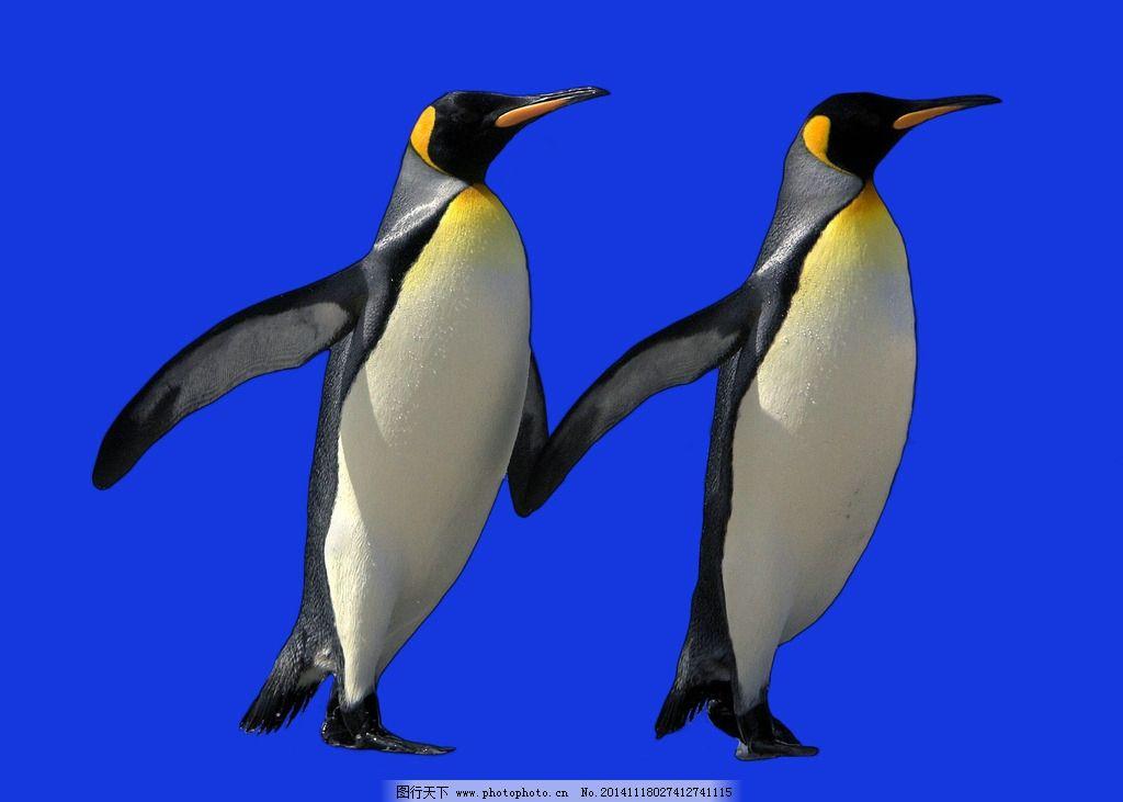 动物 企鹅 两只企鹅 蓝色背景 企鹅牵手 设计 生