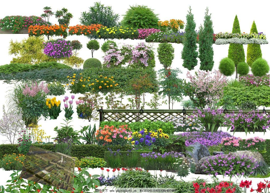 园林景观植物素材图片