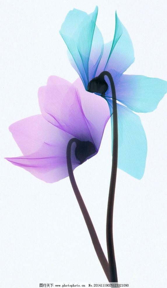 花卉 花朵 装饰画 手绘 透明花 热销款图 设计 生物世界 花草 300dpi