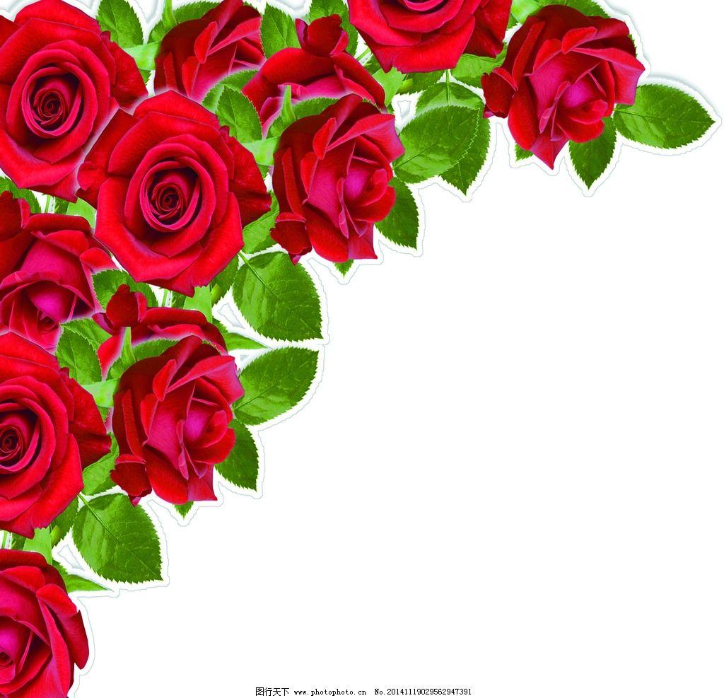 玫瑰花 白玫瑰 红玫瑰 蓝玫瑰 平面素材 psd分层素材 设计 平面设计