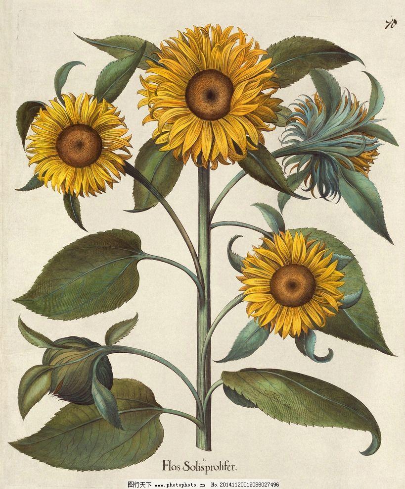 花类图鉴 植物 田园 装饰画 墙画 手绘 未分层 花类图鉴 设计 文化