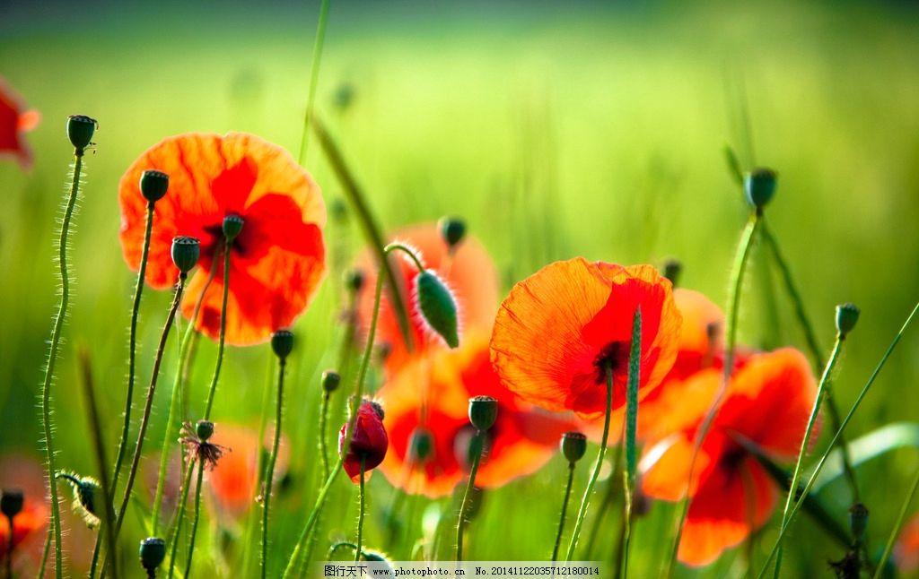 花卉风景矢量图