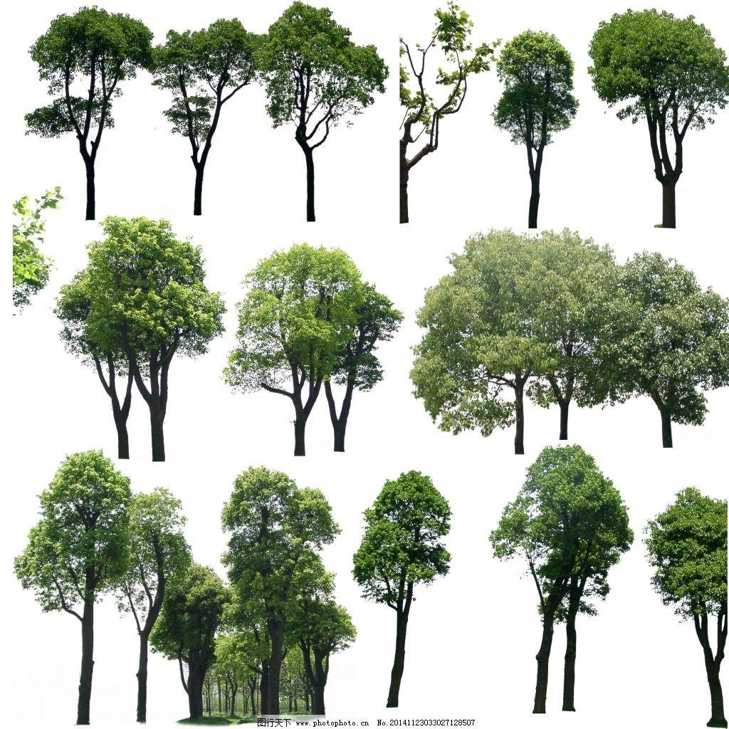景观单棵树psd素材免费下载 景观 效果图后期 园林 景观 园林 效果图