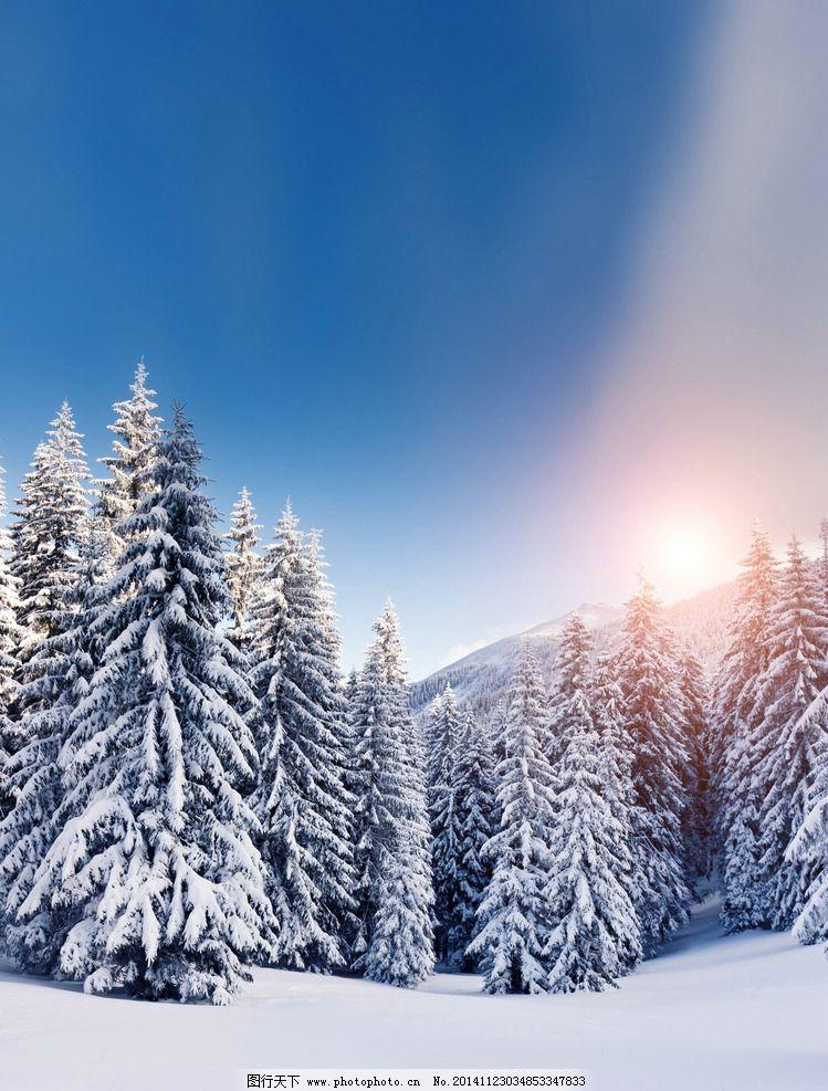 雪松 雪地 冬天 冬季 白雪 蓝天 森林 雪山 松树 风景 自然