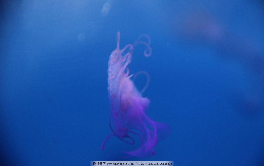 海洋生物 动物世界 海洋管