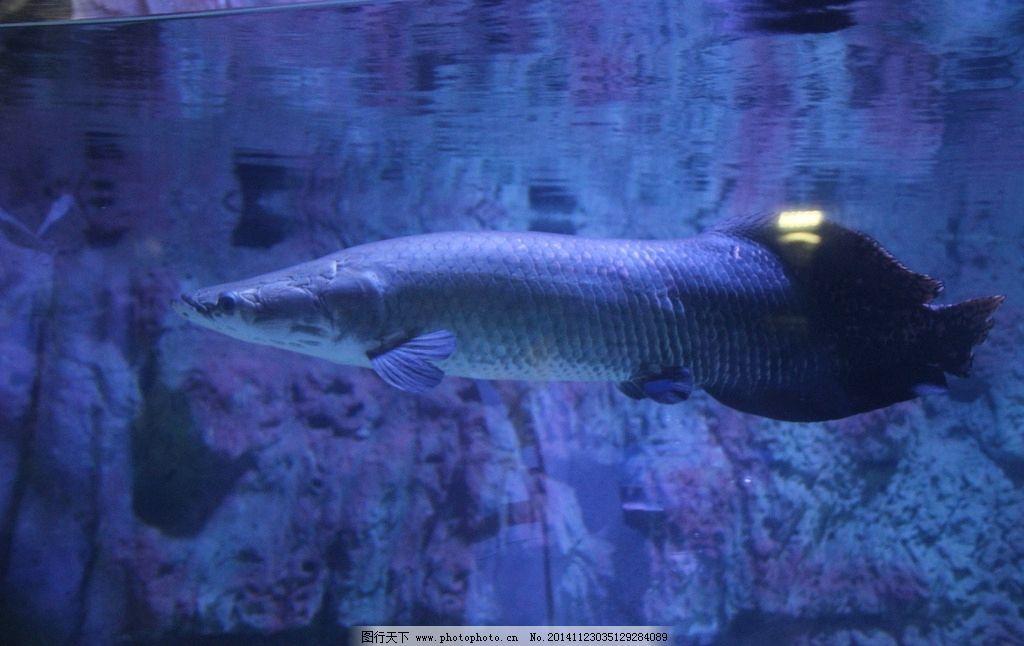 海洋生物 海洋馆 动物世界 野生生物 游动 自然印象 摄影