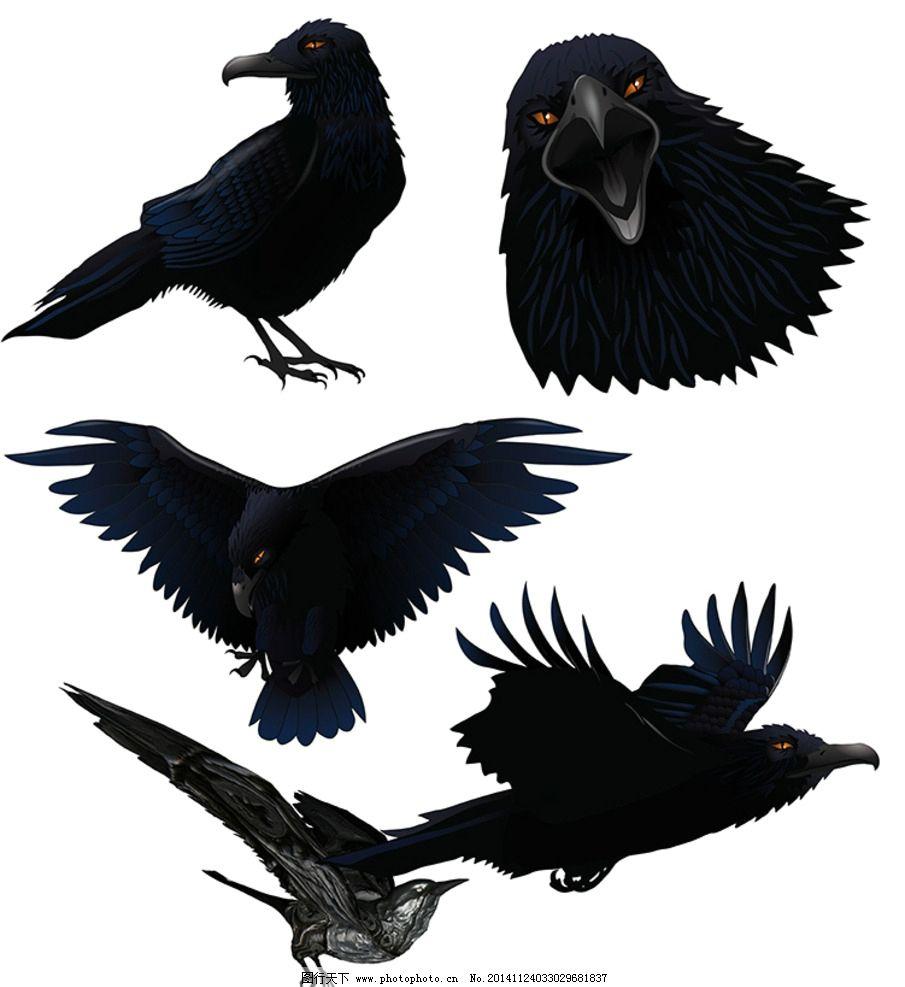 矢量乌鸦 黑乌鸦 乌鸦动态