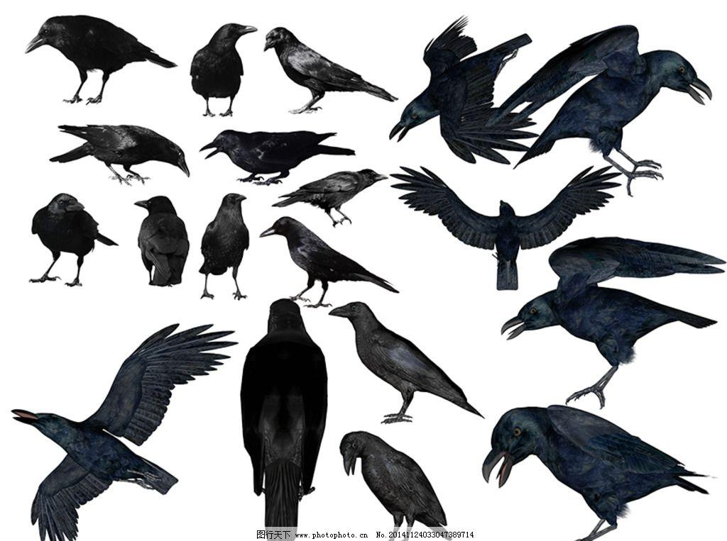 乌鸦素材 3d 黑乌鸦 乌鸦动态