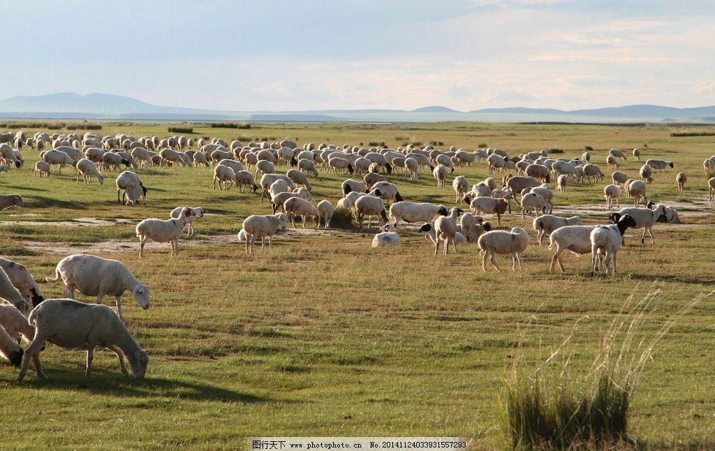 草原羊群图片