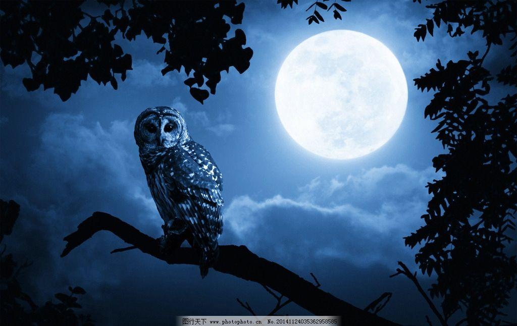 猫头鹰 野生动物 夜晚 圆月 生物世界 鸟类 摄影 摄影 生物世界 鸟类