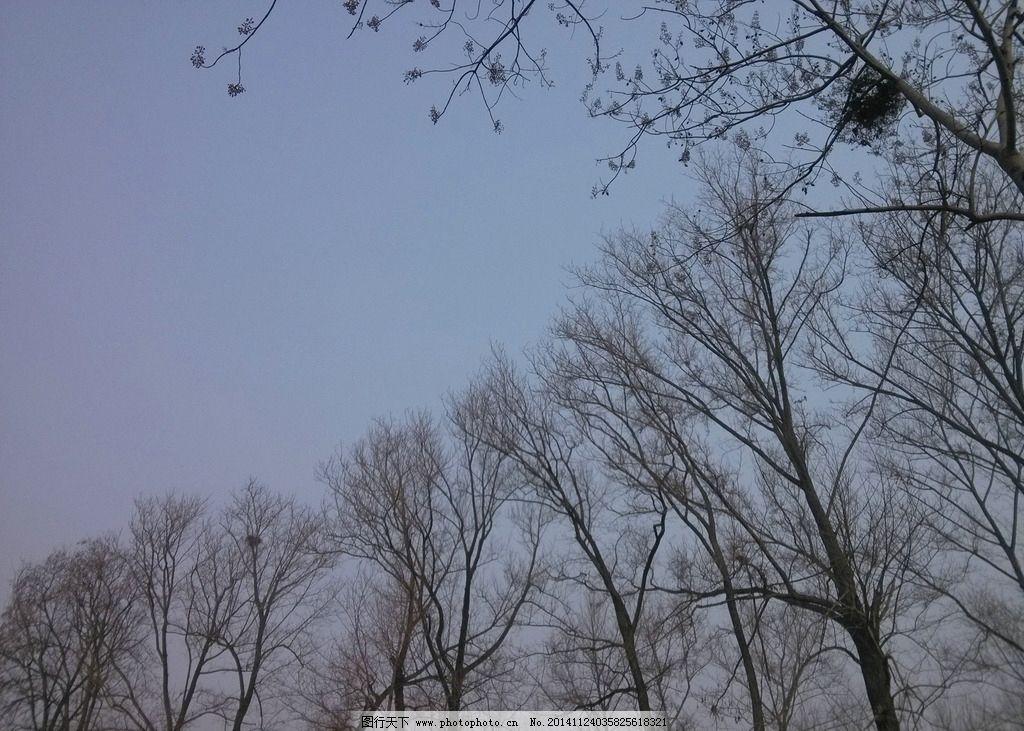 冬天的白杨树 秋冬的故乡 天空 记忆中的故乡 白杨 摄影 生物世界