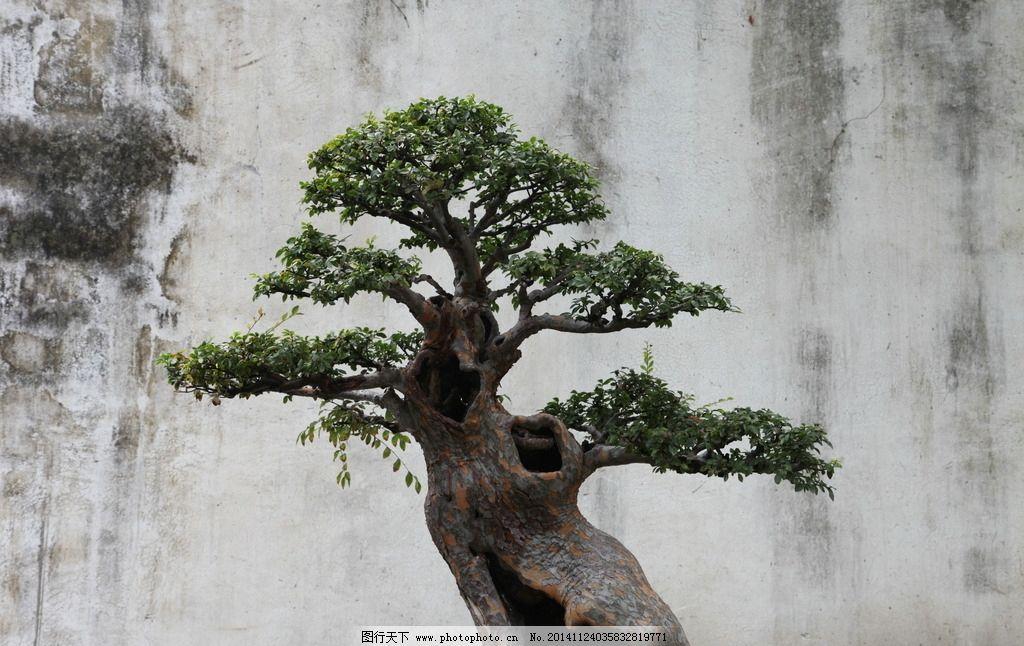 盆景 苏州 园林 古典 中国风 摄影