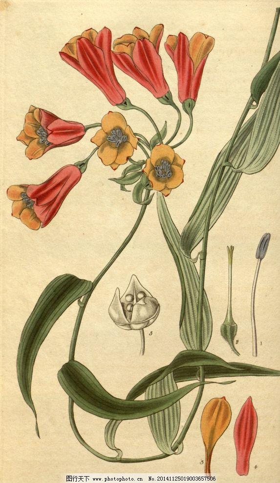 花类图鉴 田园 装饰画 墙画 手绘 未分层 花类图鉴 设计 文化艺术