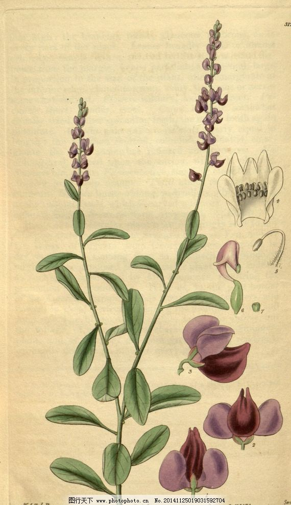 花类图鉴 植物手绘图片,田园 装饰画 墙画 未分层-图