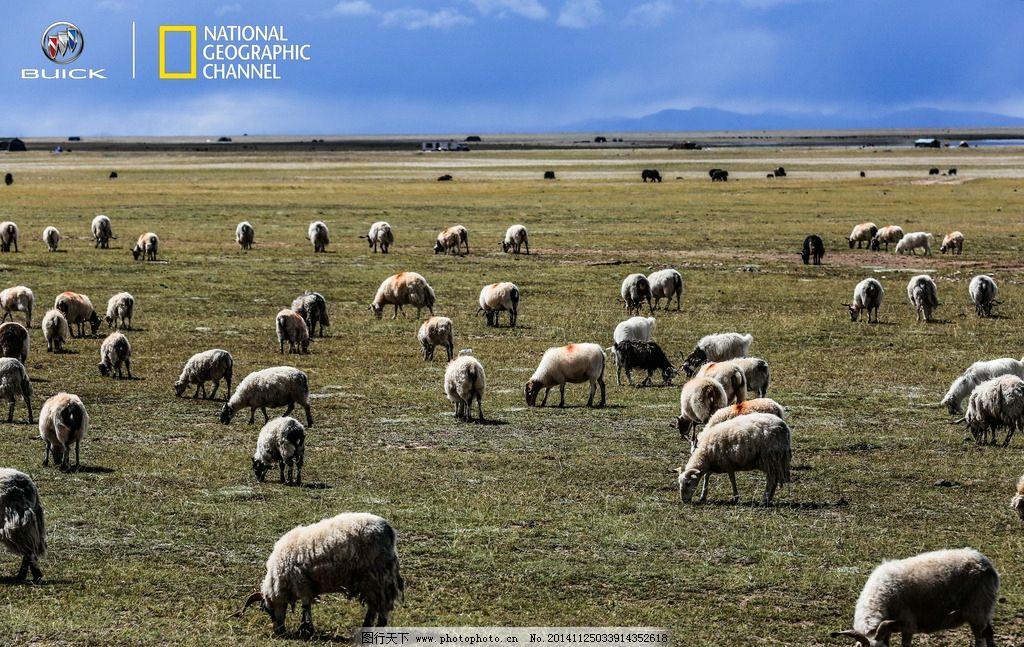 壁纸 草原 动物 牛 桌面 1024_647