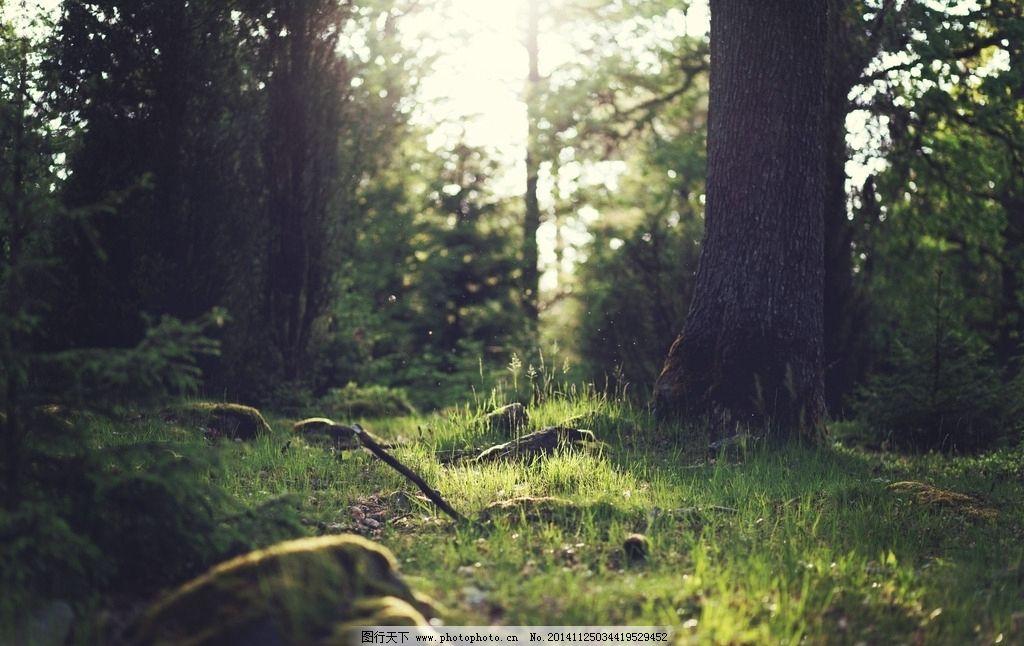 大自然森林动物画