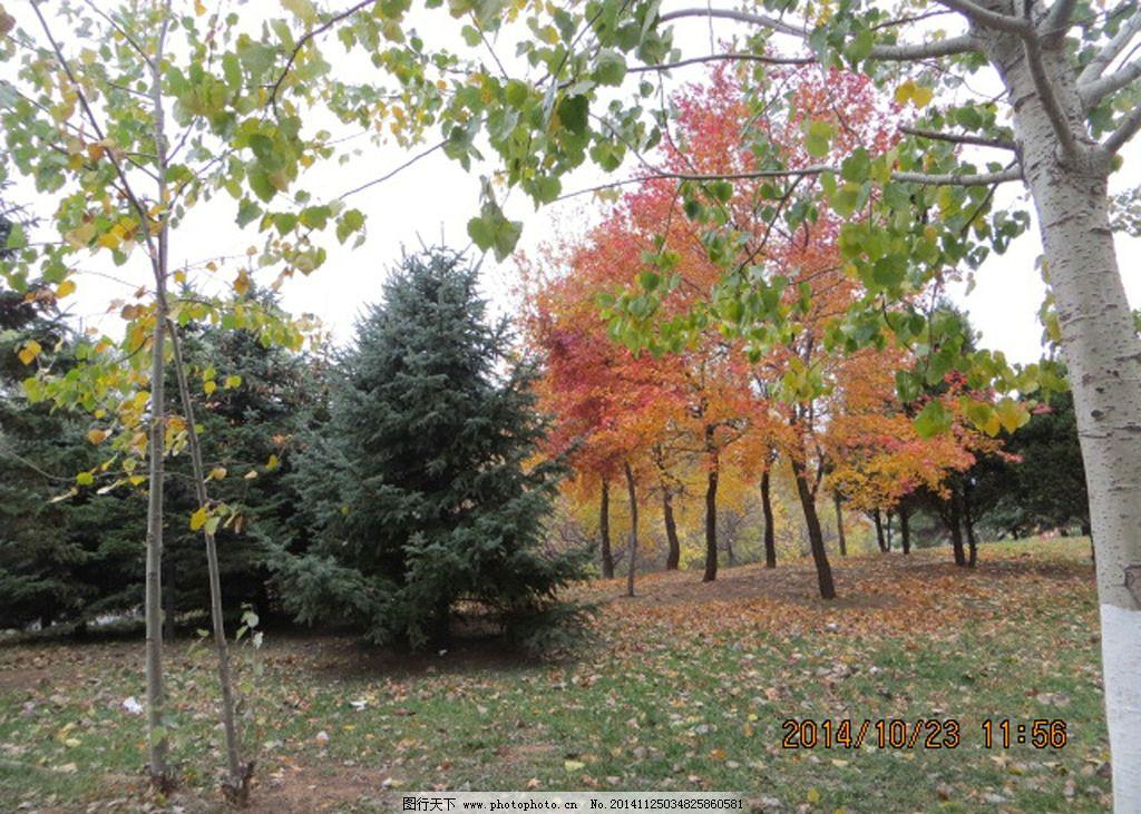 秋天 树林图片