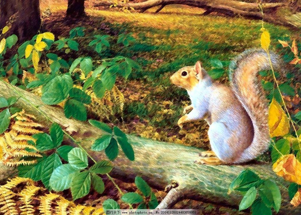 野生动物 树木 松鼠 风景