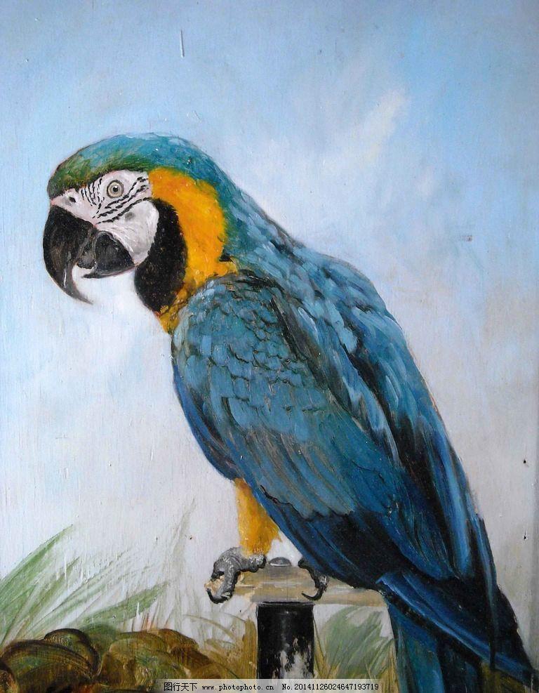 鹦鹉 动物 鸟 壁画 装饰画 插画 风景专辑 设计 生物世界 鸟类 72dpi