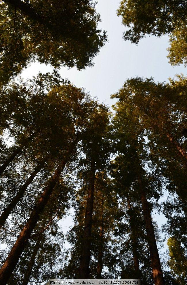 四季树 秋天 树叶 树林 天空 傍晚 黄昏 摄影 自然景观 自然风景 300