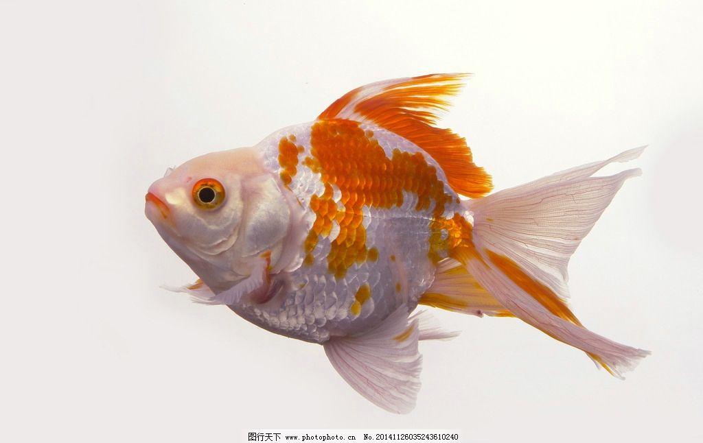 水中最大的动物