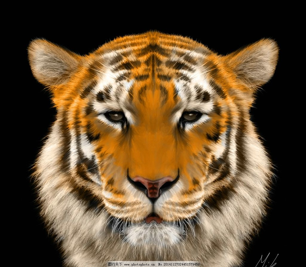 虎 老虎 猛兽 猫科动物 虎纹 飞禽走兽 设计 生物世界 野生动物 300