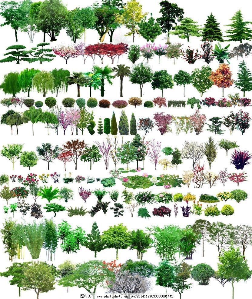 ps植物图例图片
