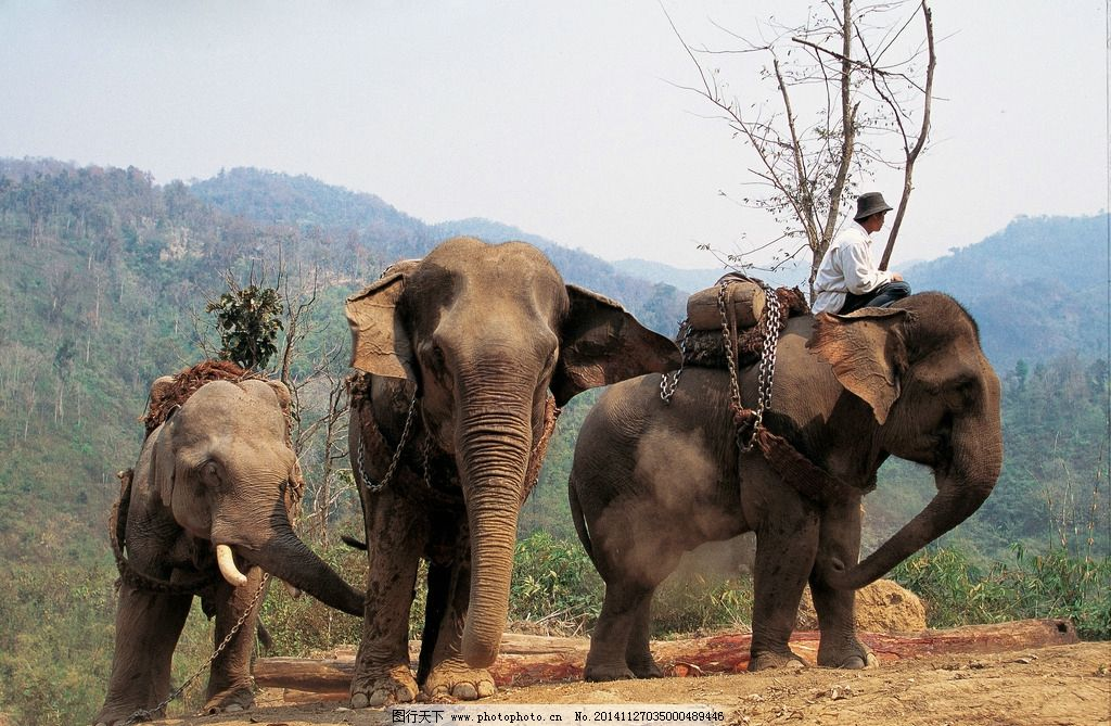 象 大象 大象摄影 野生大象 野生动物 飞禽走兽 摄影 生物世界 野生动