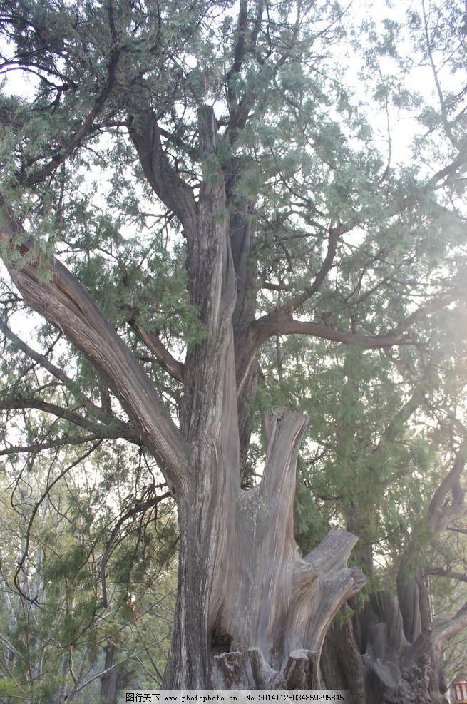 大树 树木 风景 摄影 天空 风景专辑 摄影 自然景观 自然风景 72dpi