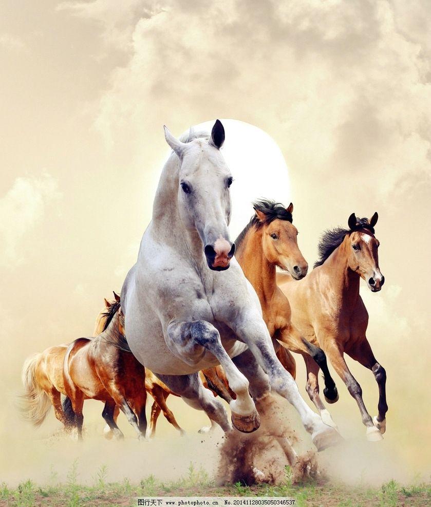 唯美 清新 骏马 马 奔腾 飞驰 动物 野生动物 摄影 生物世界 野生动物