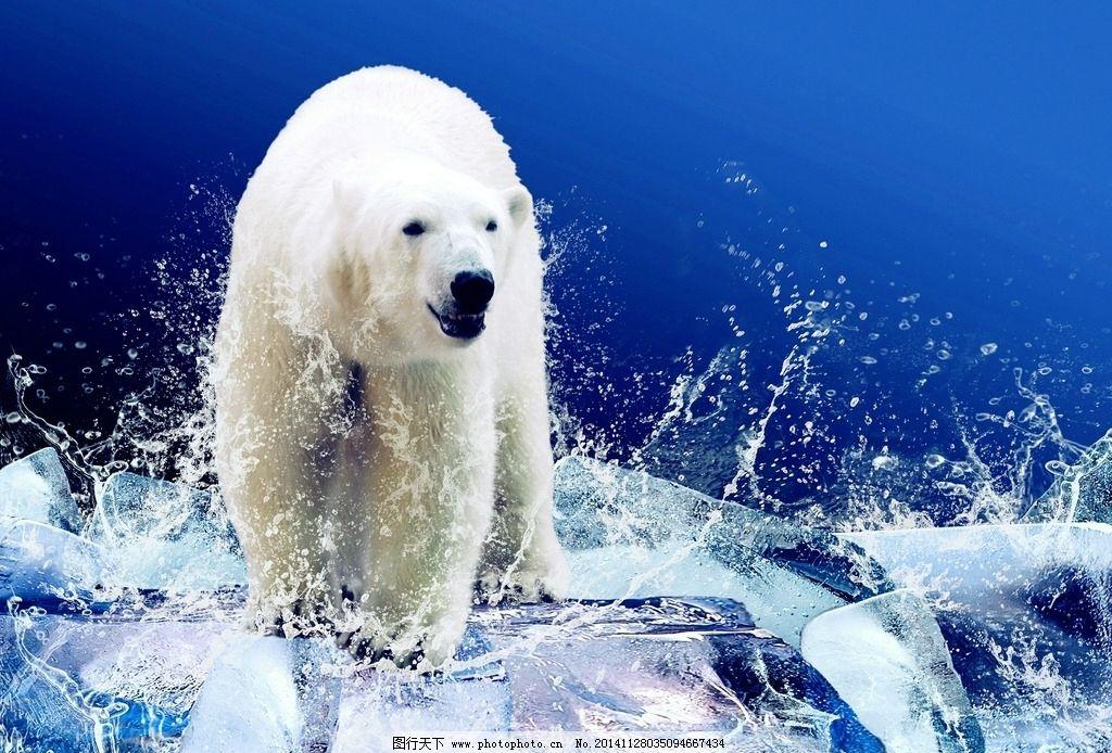 唯美 清新 北极 北极熊 可爱 动物 野生动物 摄影 生物世界 野生动物