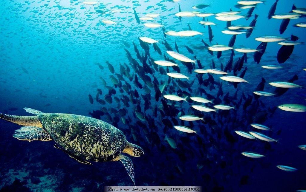 唯美海龟 清新 海洋动物 可爱 野生动物 摄影